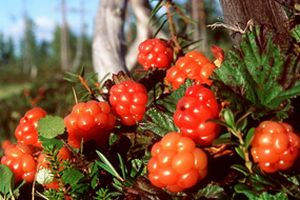 Cloudberry2
