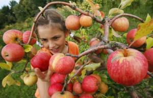 applepicking3